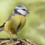 bird©Pixabay