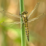 dragonfly-348433_1920