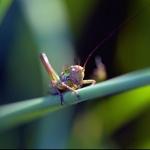 grasshopper-18414_1920