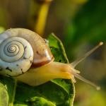 snail-405384_1280